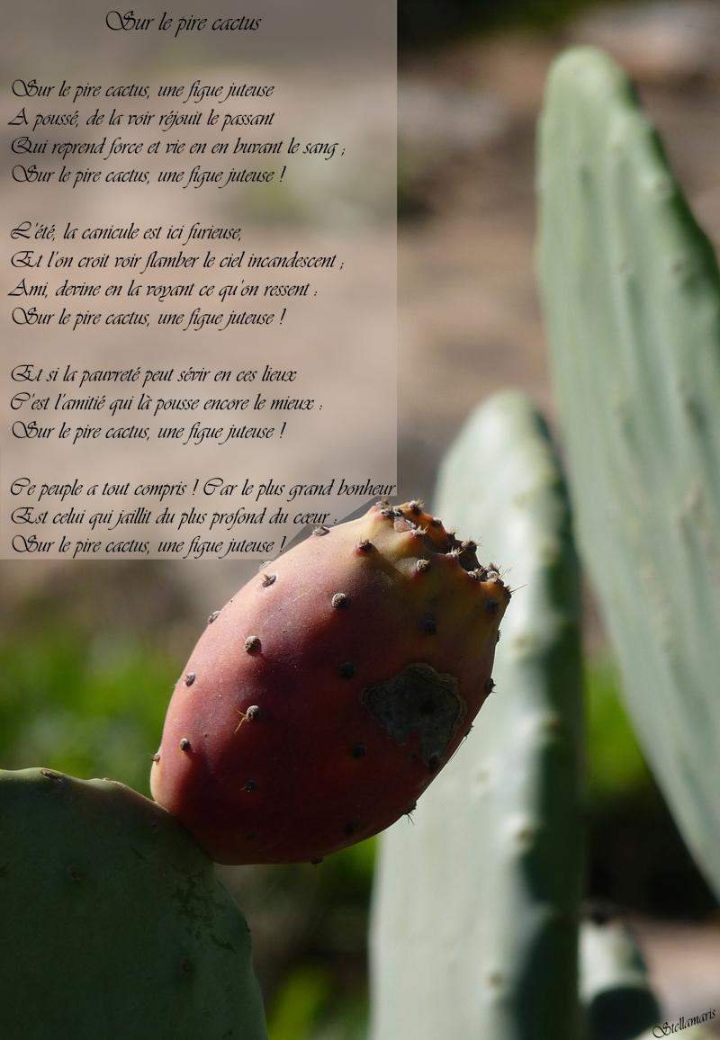 Sur le pire cactus / / Sur le pire cactus, une figue juteuse / A poussé, de la voir réjouit le passant / Qui reprend force et vie en en buvant le sang ; / Sur le pire cactus, une figue juteuse ! / / L'été, la canicule est ici furieuse, / Et l'on croit voir flamber le ciel incandescent ; / Ami, devine en la voyant ce qu'on ressent : / Sur le pire cactus, une figue juteuse ! / / Et si la pauvreté peut sévir en ces lieux / C'est l'amitié qui là pousse encore le mieux : / Sur le pire cactus, une figue juteuse ! / / Ce peuple a tout compris ! Car le plus grand bonheur / Est celui qui jaillit du plus profond du cœur : / Sur le pire cactus, une figue juteuse ! / / Stellamaris